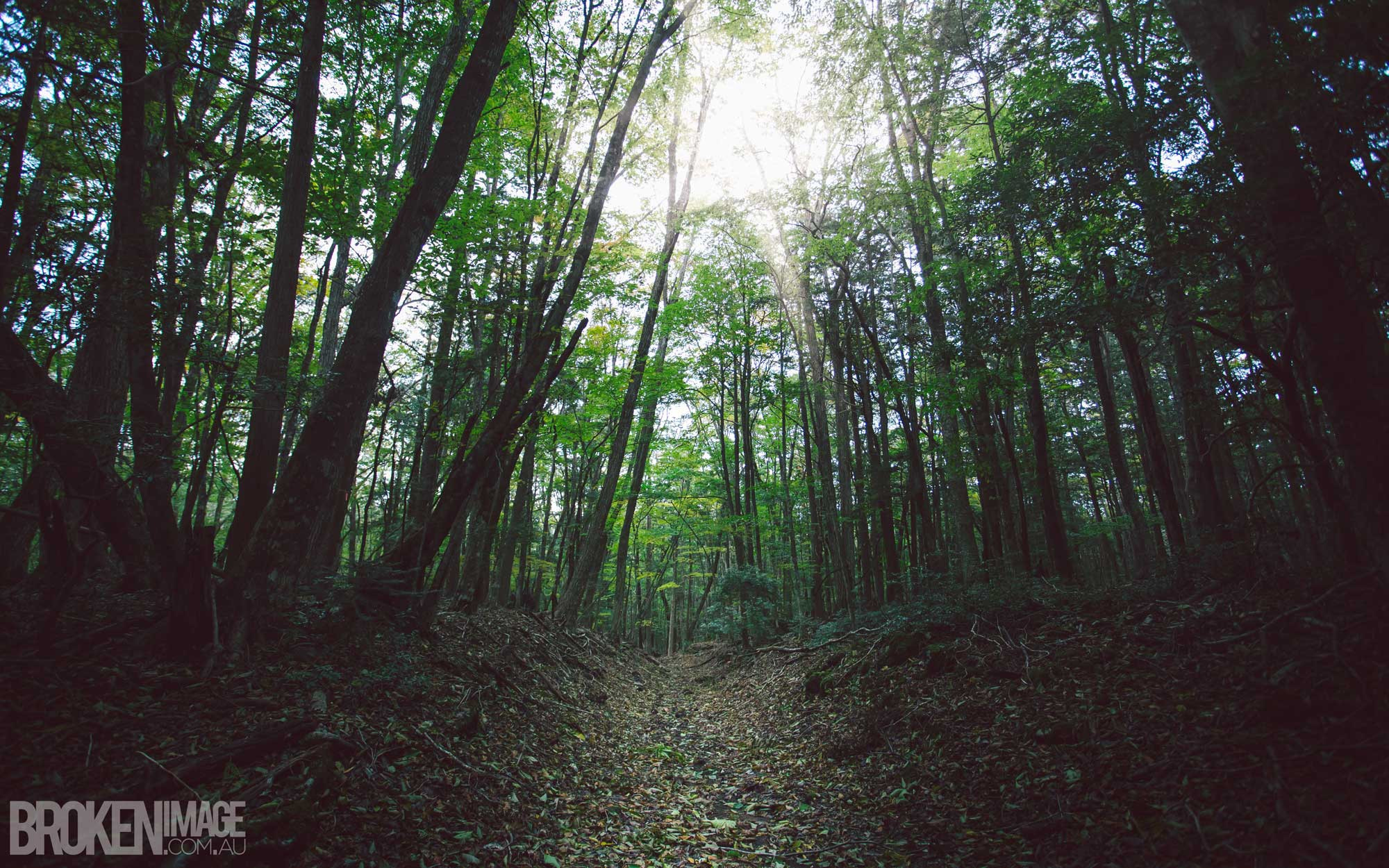 Visiting The Aokigahara Forest